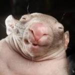 Profile picture of Eric Brackenridge